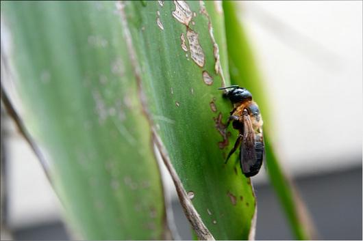 草に停まっている蜂