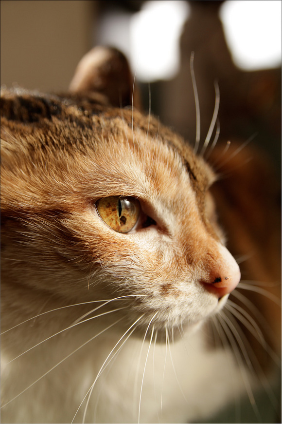 cat2011.jpg