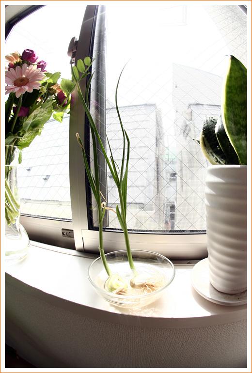 garlic05.jpg