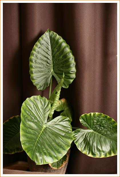 plant01.jpg