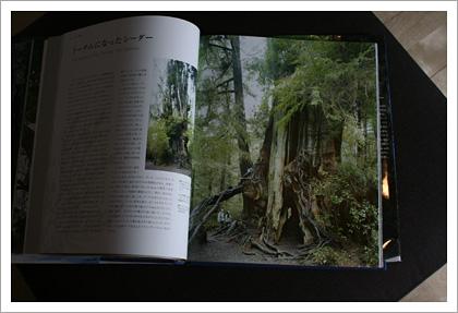 treebook01.jpg
