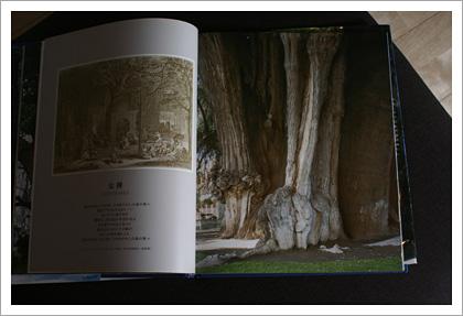 treebook02.jpg